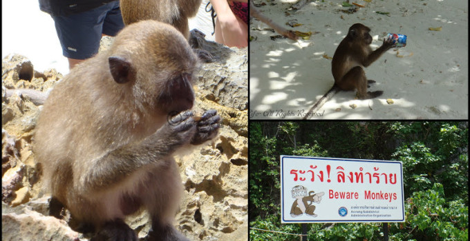 Thailand Phuket Part 3 – Phi Phi, Khai & Island Safari