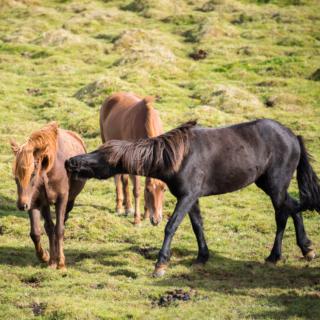 Day 5/22 Iceland: Horseriding & Seljalandsfoss