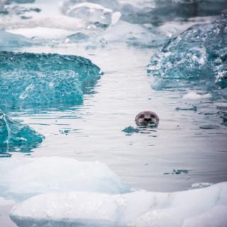Day 8/22 Iceland: Jökulsárlón & Glacial Hiking
