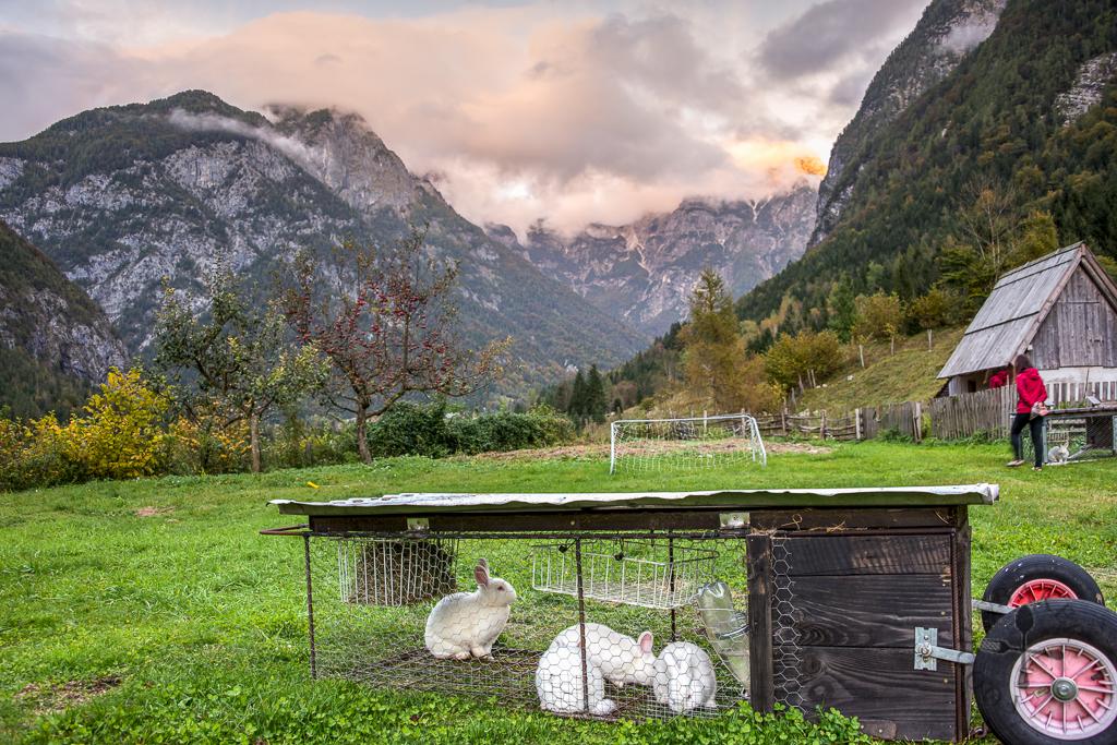 Pri Plejeru Farm, Slovenia
